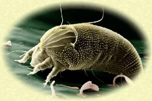 miteresarch org database about mites and ticks